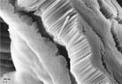 C5 Nanotubos TiCO2