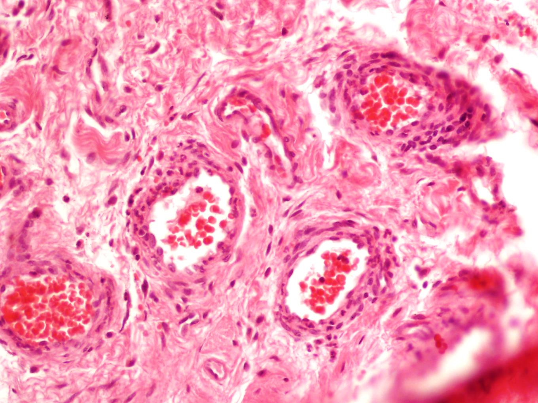 Tincion_Histologia.jpg
